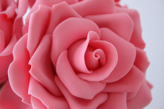 img_rose-close-up
