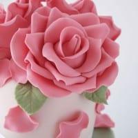 IMG_rose 1