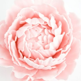 How to make a gum paste peony (part 2)
