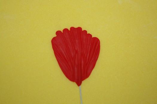 poppy (18) (525x350)