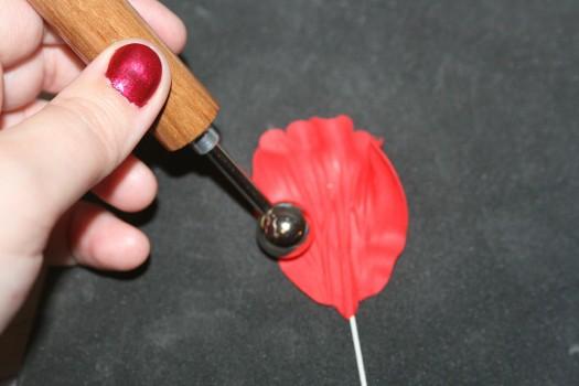 poppy (19) (525x350)