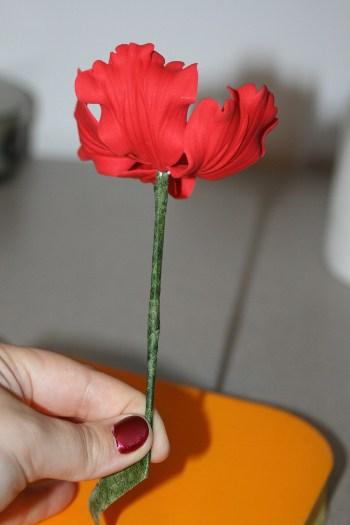 poppy (26) (350x525)