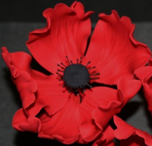 poppy (29) (525x507)