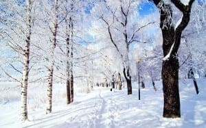 snow-street1-300x187